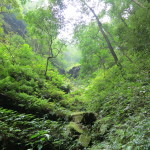 Nature's pharmacy- this area is home to many Chinese herbs.